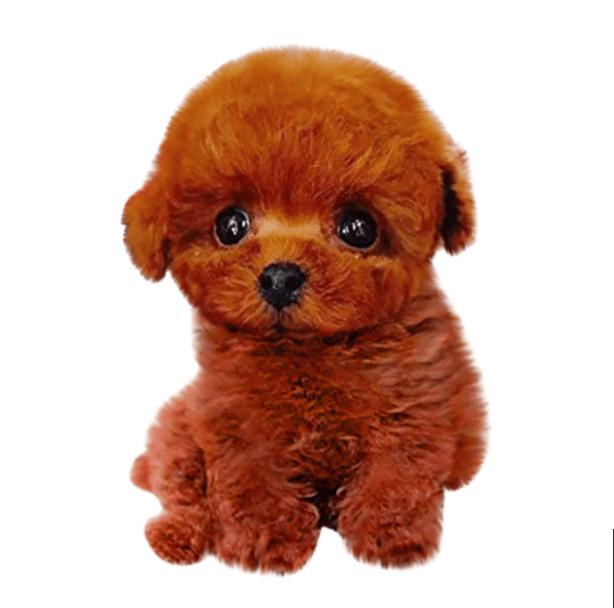 Mignon chiot teddy en peluche